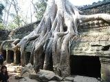 Temple_Ta-Prohm_a_Siem_Reap